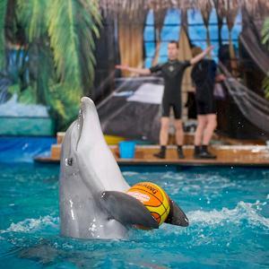 Дельфинарии, океанариумы Покровского