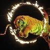 Цирки в Покровском