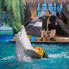 Дельфинарии, океанариумы в Покровском