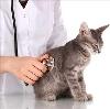 Ветеринарные клиники в Покровском